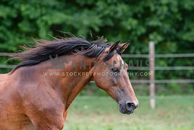close up of horse galloping in the pasture