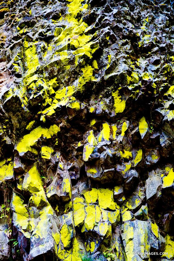 YELLOW LICHEN COVERED ROCK COLUMBIA RIVER GORGE OREGON