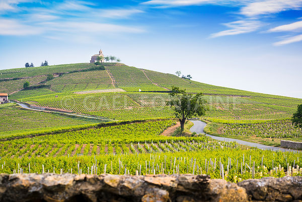 La madonne du village de Fleurie et son vignoble, Beaujolais