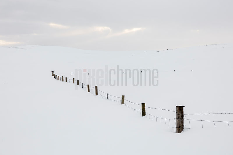 The Ghosts of Trees—Fence in a Snow-Covered Field