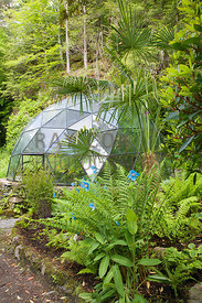 Meconopsis, ferns and Trachycarpus fortunei by geodesic dome fernery