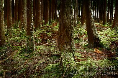 Green forest moss and trees