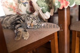 Domestic Kitten on Chair