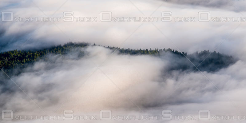 Clouds Parting to Reveal the Redwood Forest. California