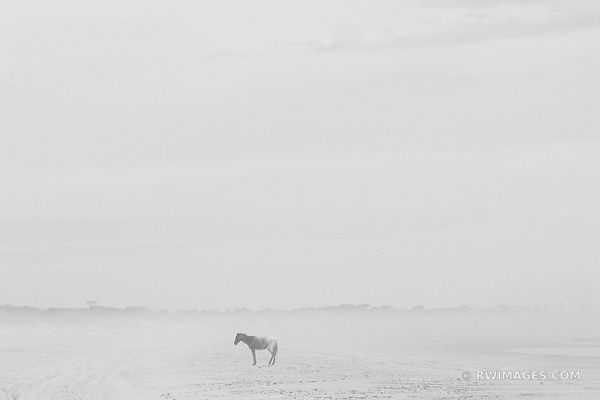 LONER WILD HORSE CUMBERLAND ISLAND GEORGIA BLACK AND WHITE