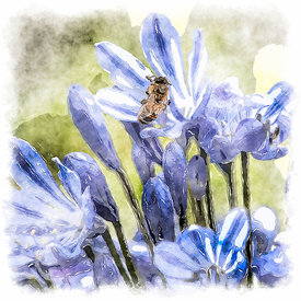 Agapanthus with Bee