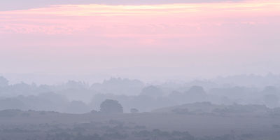 Soft_dawn_mist_in_the_New_Forest