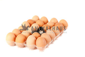 Newly hatched chicken sitting among brown eggs