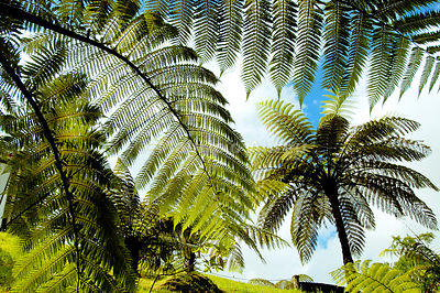 Giant ferns in Furnas. São Miguel, Azores islands, Portugal