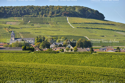 Champagne vineyards Mancy in Marne department, France