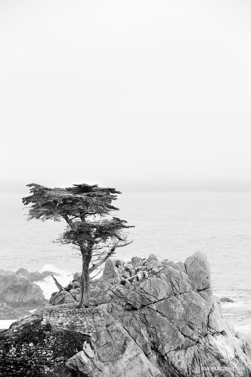 LONE CYPRESS TREE PEBBLE BEACH CALIFORNIA BLACK AND WHITE VERTICAL