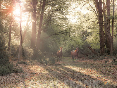 Horses in New Forest, Hampshire, UK