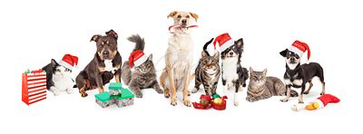 Christmas Group of Cats and Dogs Together