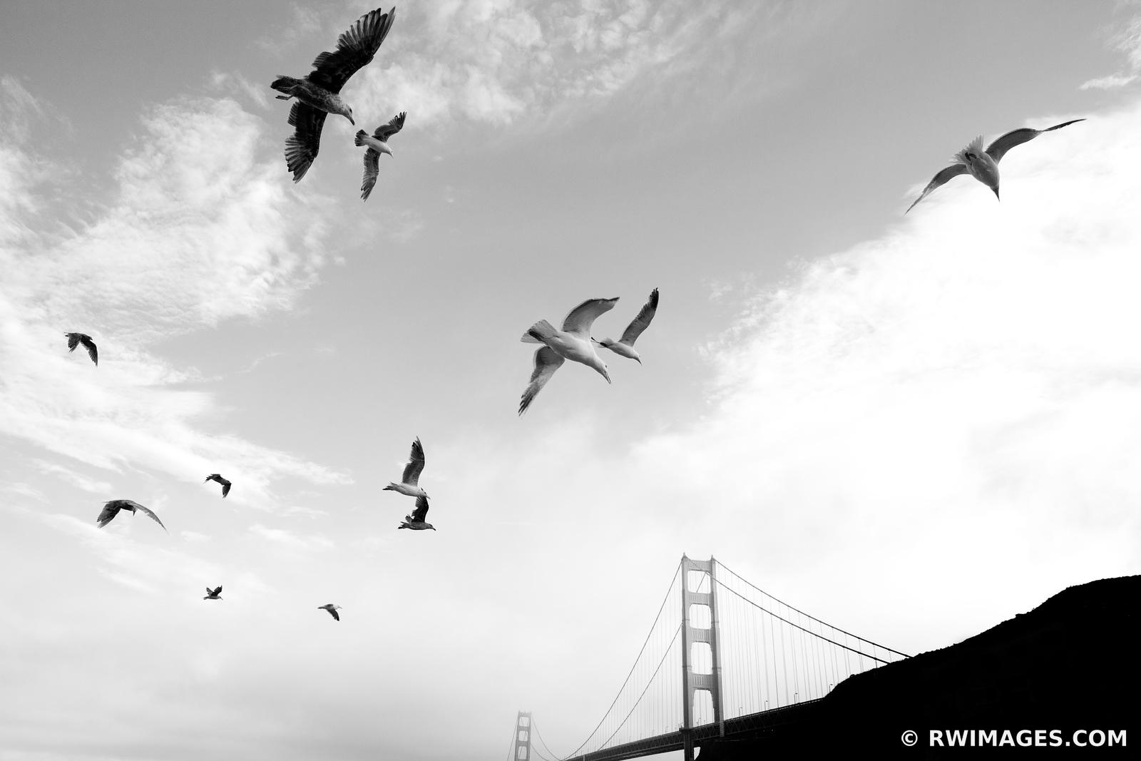SEAGULLS SUNSET GOLDEN GATE BRIDGE SAN FRANCISCO BLACK AND WHITE