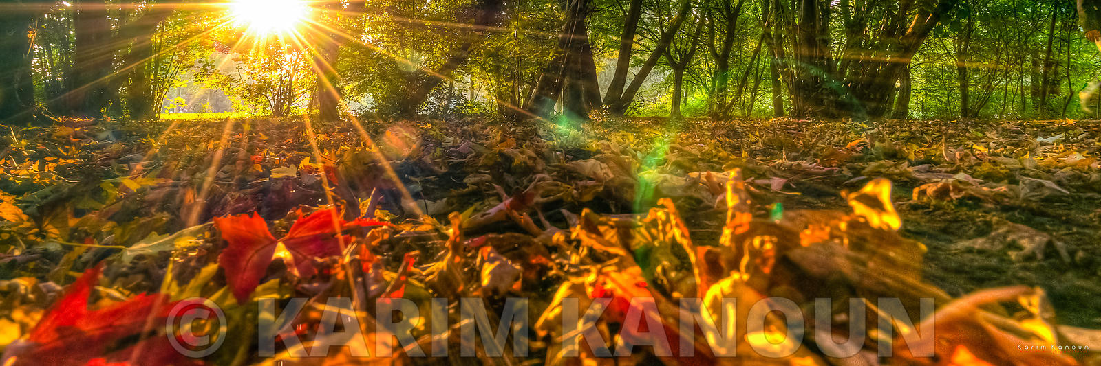 Panorama - Autumn sunshine in the wood