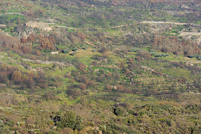 Aerial view of land abandonment, in the Faia Brava Reserve, Rewilding Europe Area, Portugal, March 2011