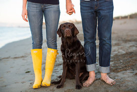 Chocolate Lab Sitting Between Couple Holding Hands on Beach