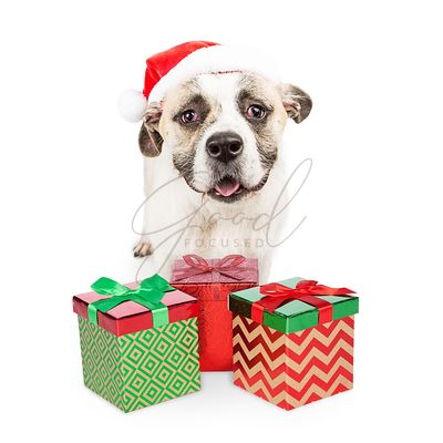 Santa Dog With Gift Boxes