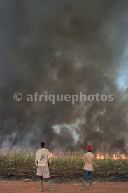 Sugar industry in Banfora, Burkina Faso