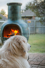 dog on patio with chiminea