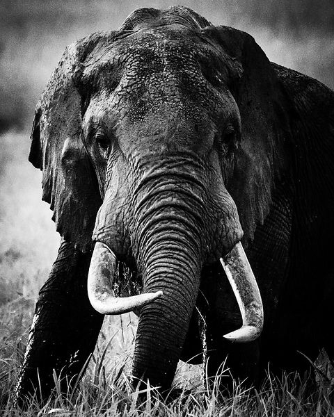 04718-Elephant_Laurent_Baheux