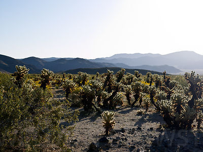 Joshua_Tree_May10_120