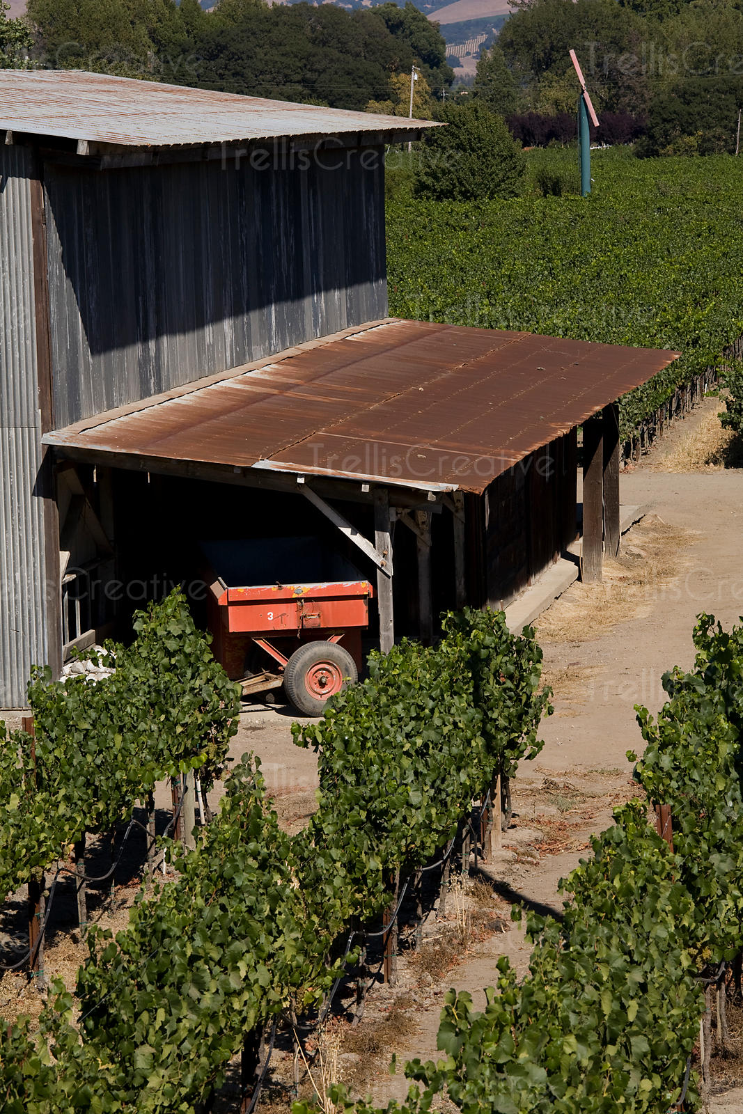 An old vineyard barn houses a tractor