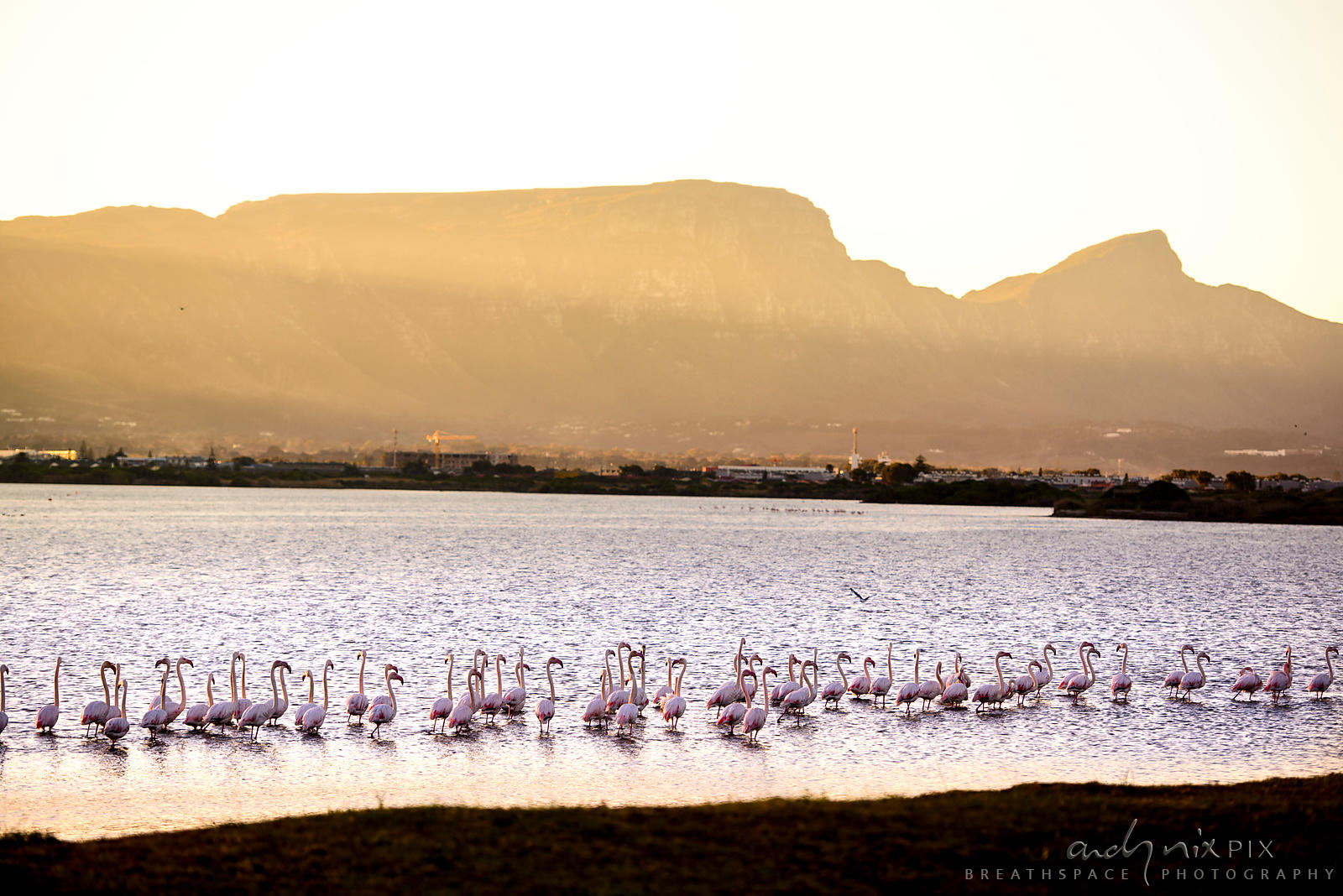 Flamingoes at Zandvlei