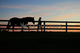 silhouette of horse and owner along fence in sunset
