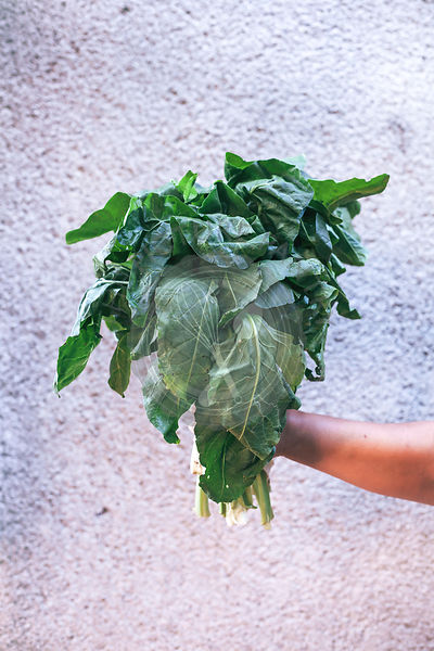 A woman holding a bunch of swiss chard