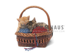 Two kittens sleeping in basket on white background