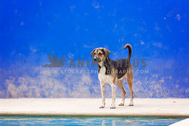 shelter dog standing at edge of pool