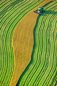 Aerial View of Rice Harvest #23