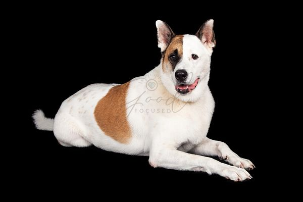 Dog Lying Against Black Background