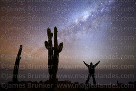 Tourist standing in front of zodiacal light and next to Echinopsis atacamensis (pasacana subspecies) cactus looking at Milky ...