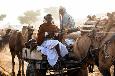 A man drives a camel cart at the Pushkar Camel Mela, Pushkar, India.