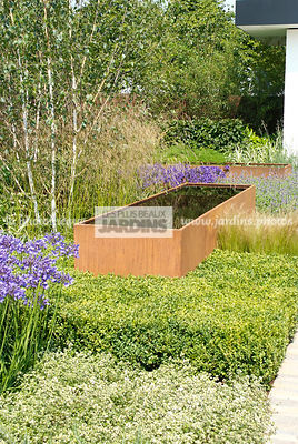 Haie taillée : Buxus semperviens (buis), Common Box, jardin contemporain. Paysagiste : Paul Martin, Hampton Court, Angleterre