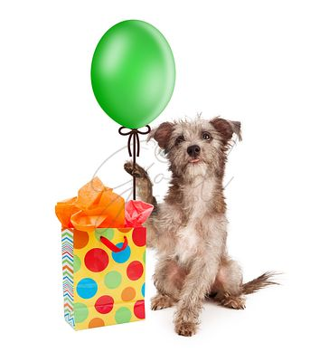 Dog Holding Party Balloon With Gift