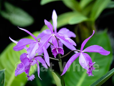 Orchid-9659_October_07_2018_NAT_WHITE