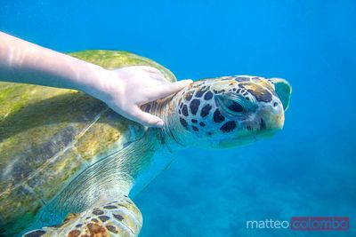 Child touching sea turtle in the Caribbean sea