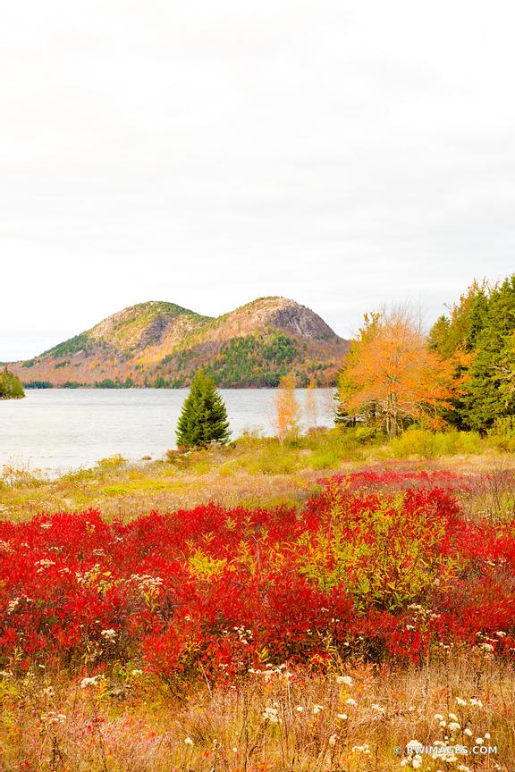 JORDAN POND AND THE BUBBLES MOUNTAINS ACADIA NATIONAL PARK MAINE FALL COLORS VERTICAL