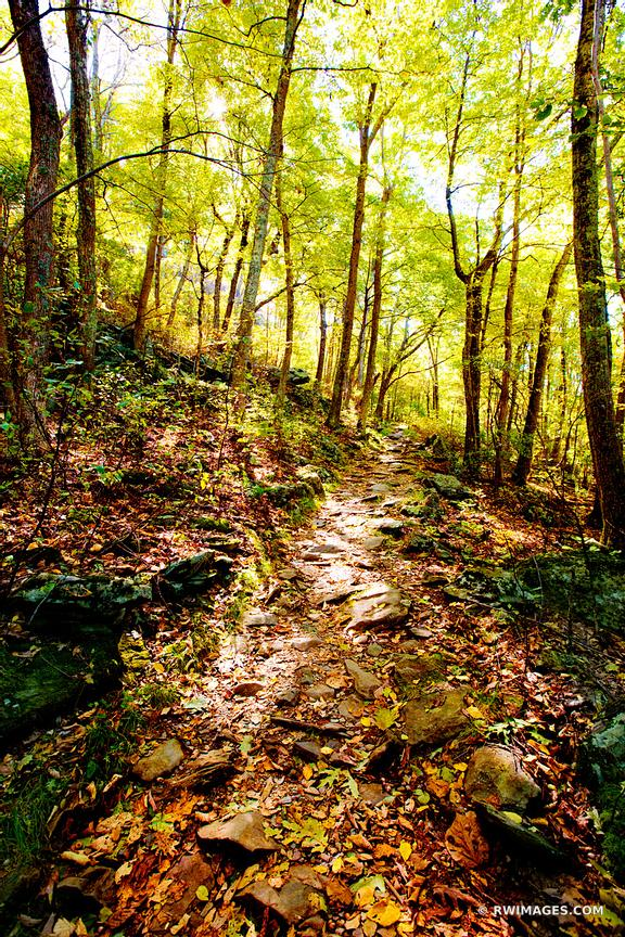 BEARFENCE TRAIL FOREST SHENANDOAH NATIONAL PARK VIRGINIA COLOR VERTICAL
