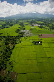 Aerial view of rice paddy fields, Ocampo, Camarines Sur, Luzon, Philippines 2008