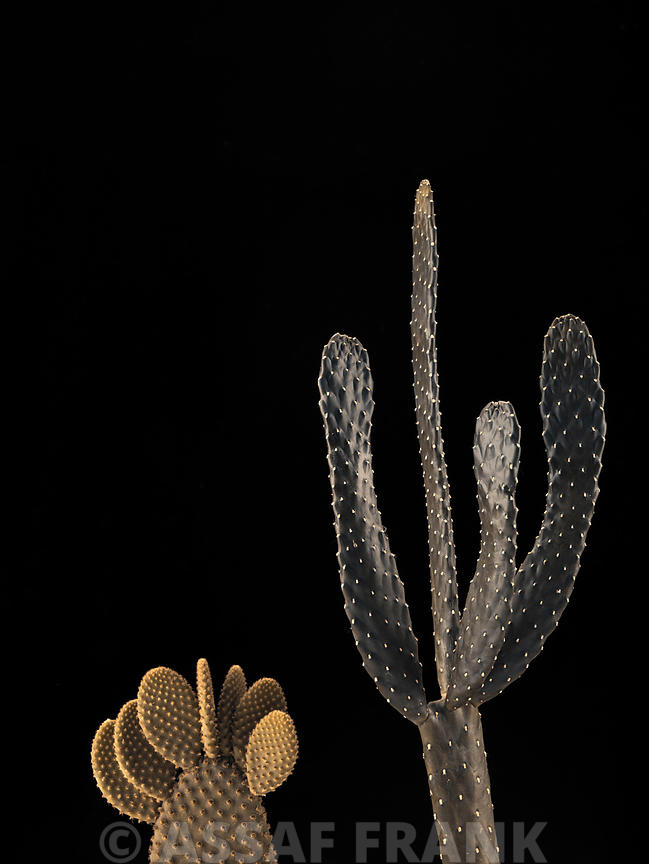 Cactus plants on black background