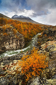 Landscape with small woodland and river, Rondane National Park, Norway, September 2013.
