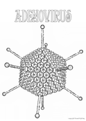 Adenovirus Colouring In Page