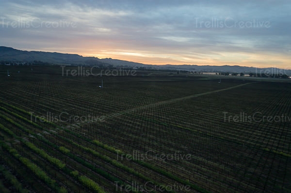 High above a vineyard on a winter dawn morning