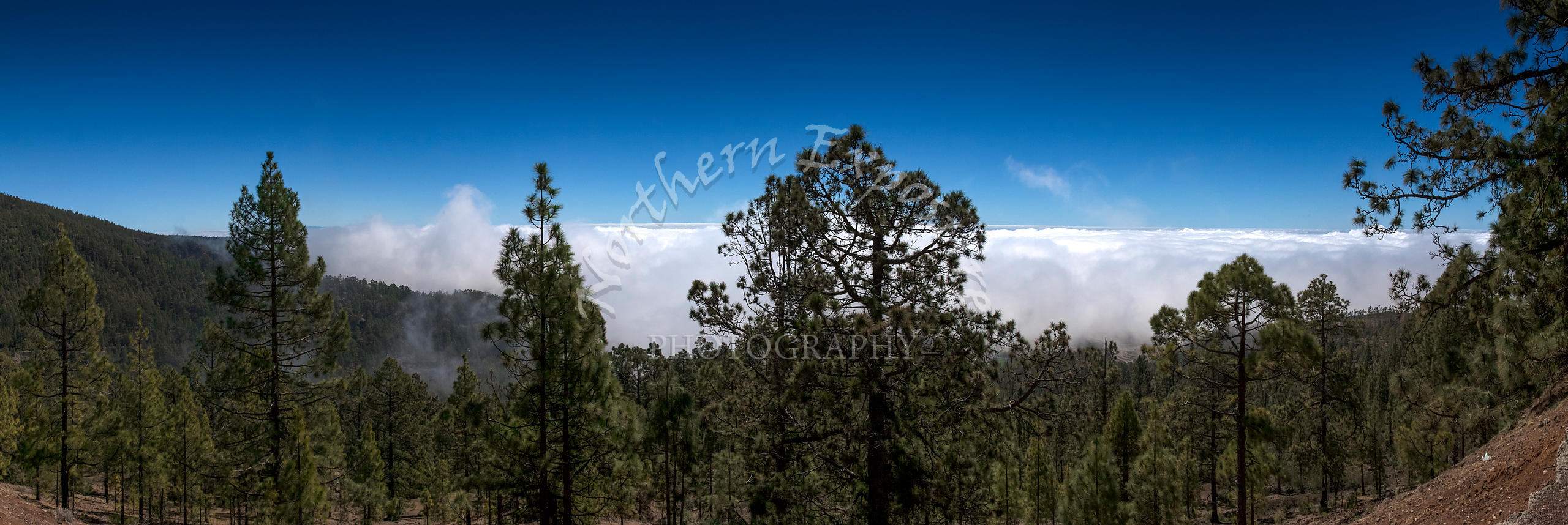 Clouds_at_the_Tree_Line