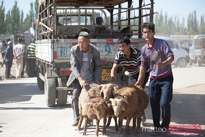 At Turpan livestock market, Xinjiang, China