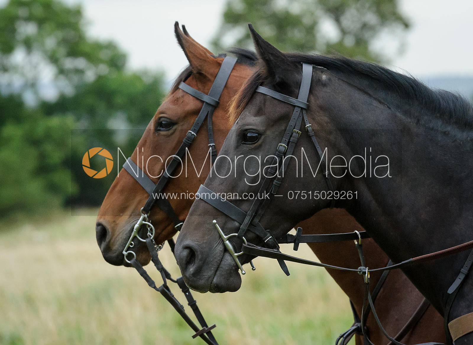 Horses' heads - The Cottesmore Hunt at Betts Barn 27/9